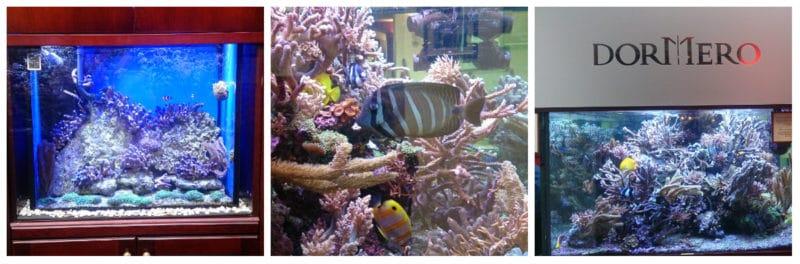 Hotel-Rotes-Ross-Aquarium