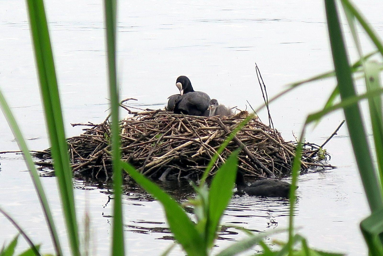 Vogelnest im Wasser