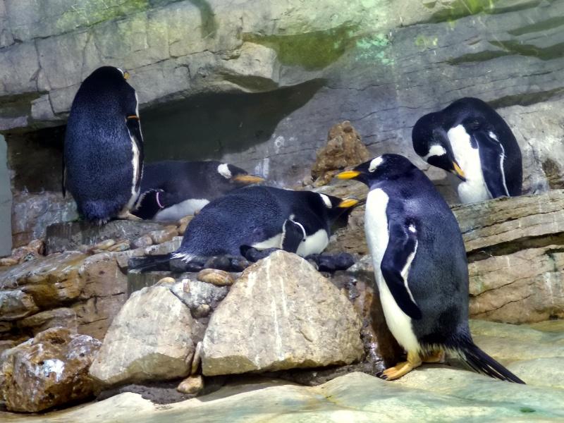 Tierpark Hellabrunn